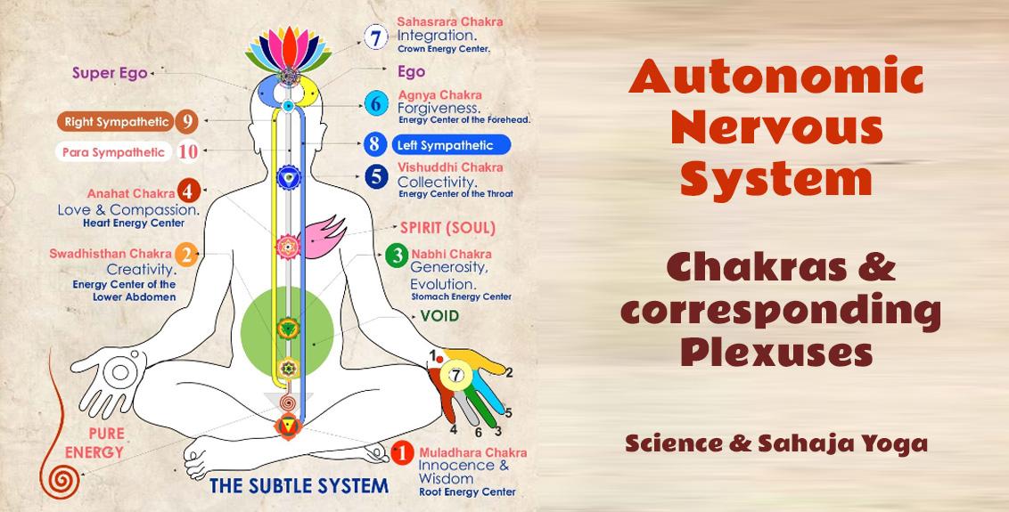 Autonomic Nervous System: Chakras & corresponding Plexuses